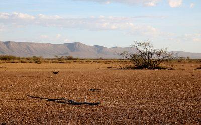 Schwere Dürre trifft auch BüllsPort