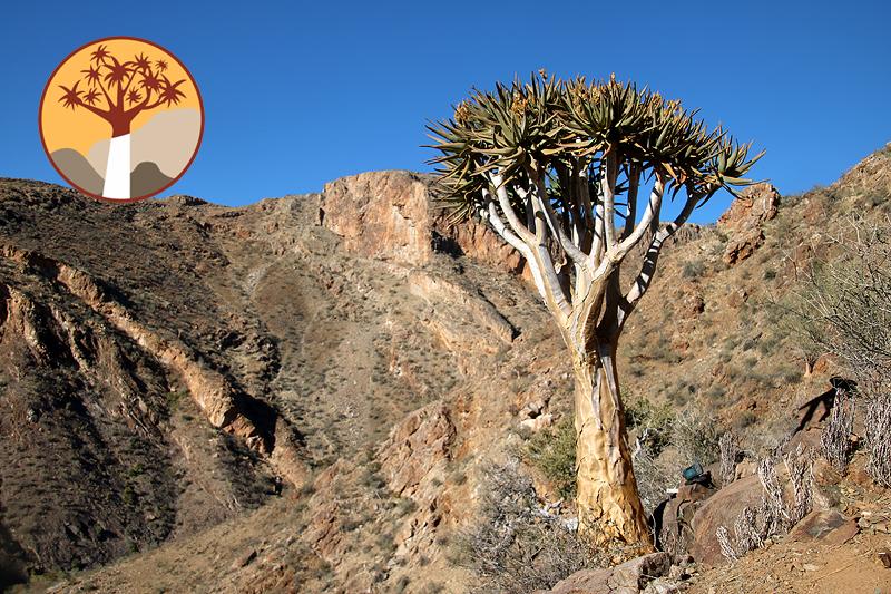 Campaign My Quiver Tree Adoption BüllsPort BuellsPort Naukluft Mountains