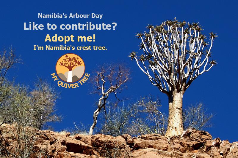 Quiver Tree Adoption Namibia's Arbour Day BüllsPort Naukluft